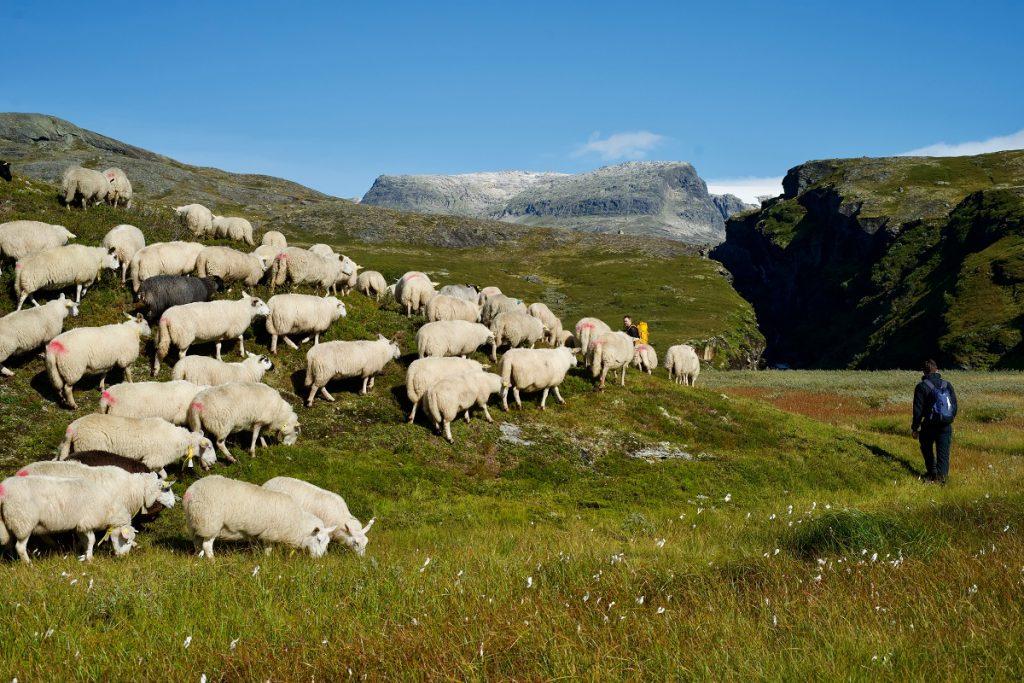 0054_Norsko_turistika