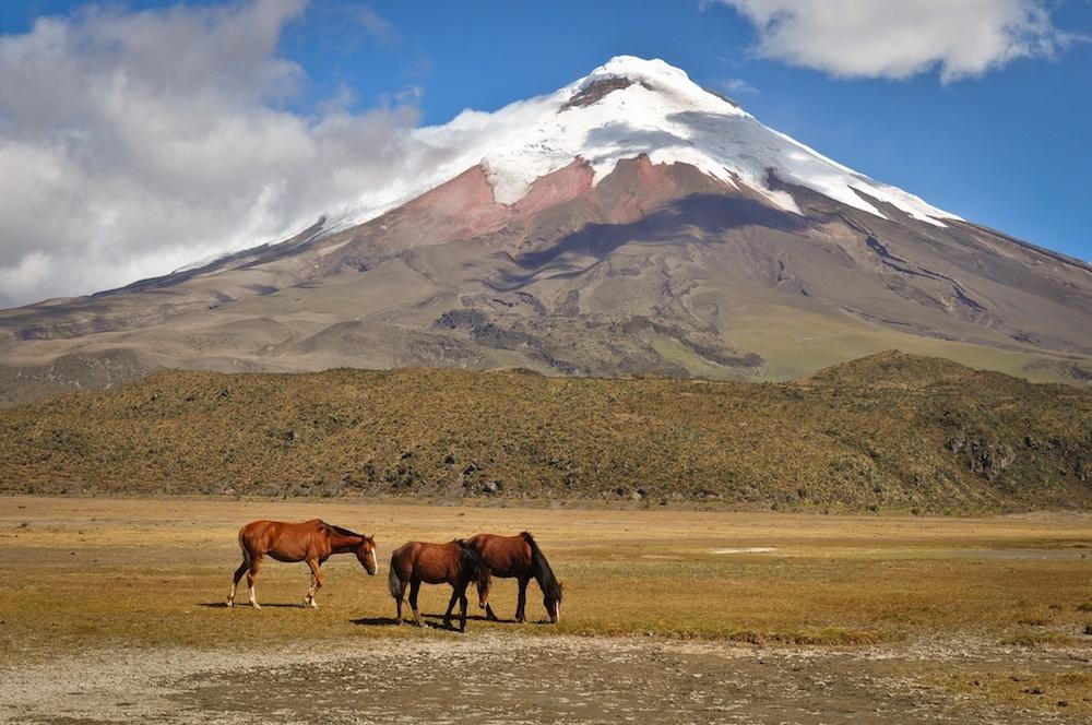 Putování na rovníku, Ekvádor 55+ - foto 2
