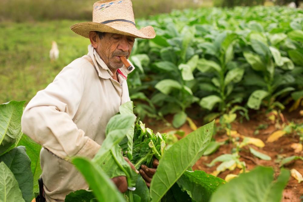 Kuba pro seniory - foto 7