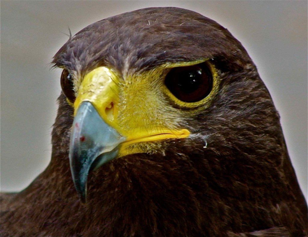 Kalábrii obývá mnoho druhů dravých ptáků. Foto: Stefano Contin.