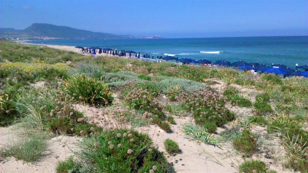 Písečná pláž hotelu Baia delle Mimose na Sardinii