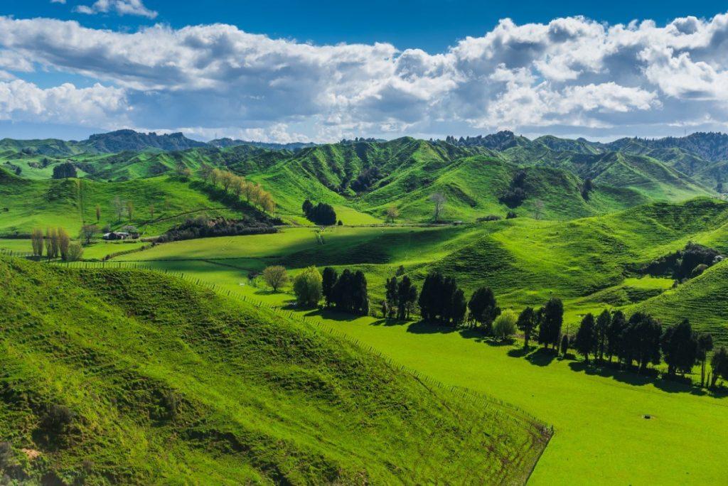 Příroda Nového Zélandu je plná zeleně.