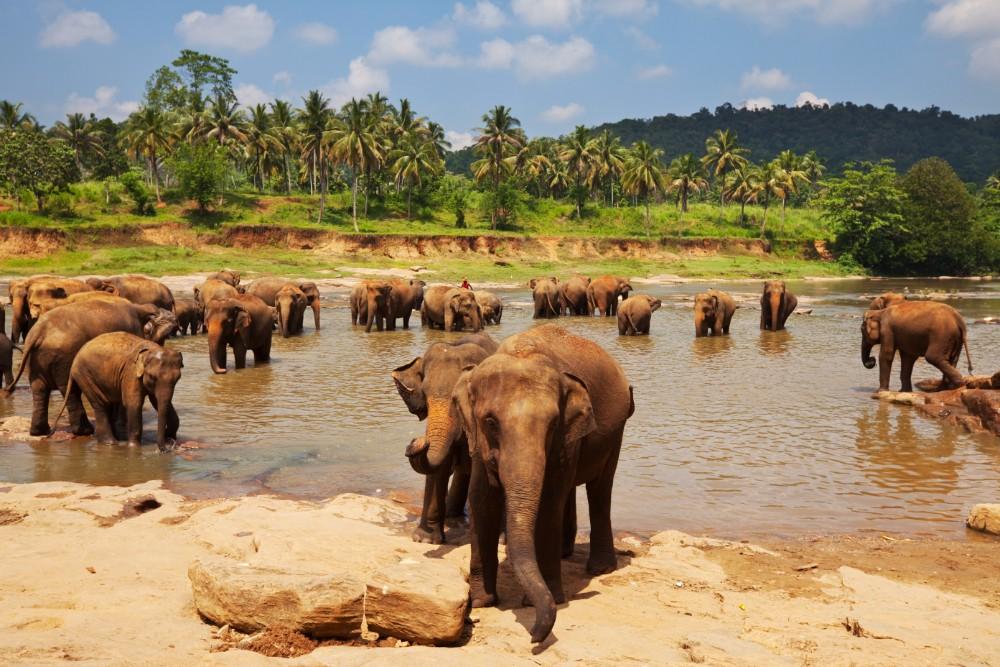 Srí Lanka - zájezdy pro seniory - foto 4