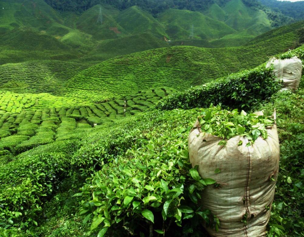 Srí Lanka - zájezdy pro seniory - foto 5
