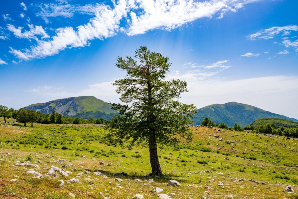 Svěží příroda v národním parku Pollino.