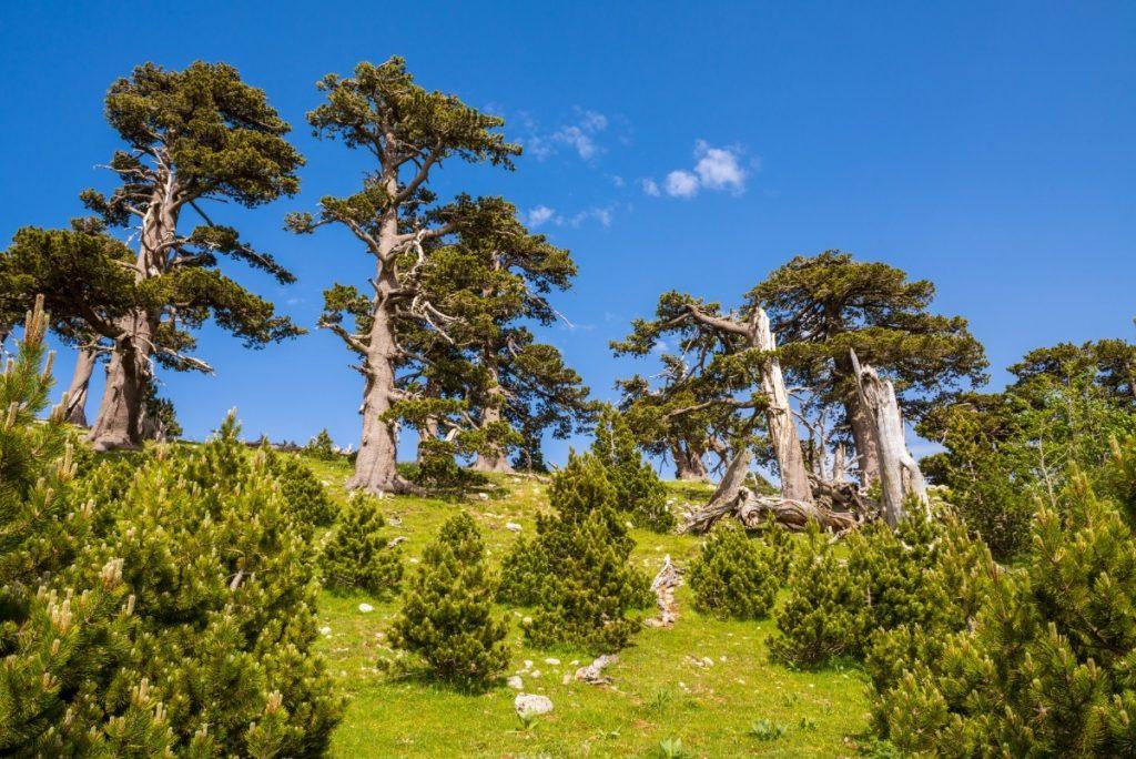 """""""Zahrada bohů"""" v národním parku Pollino."""