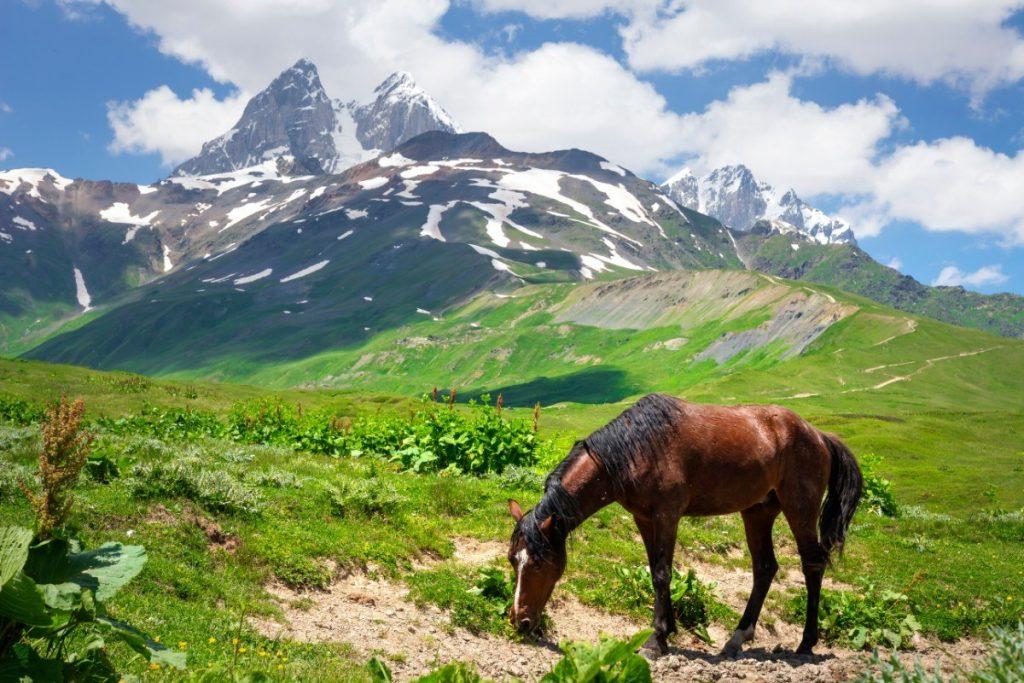 Kůň pásoucí se v Mestii