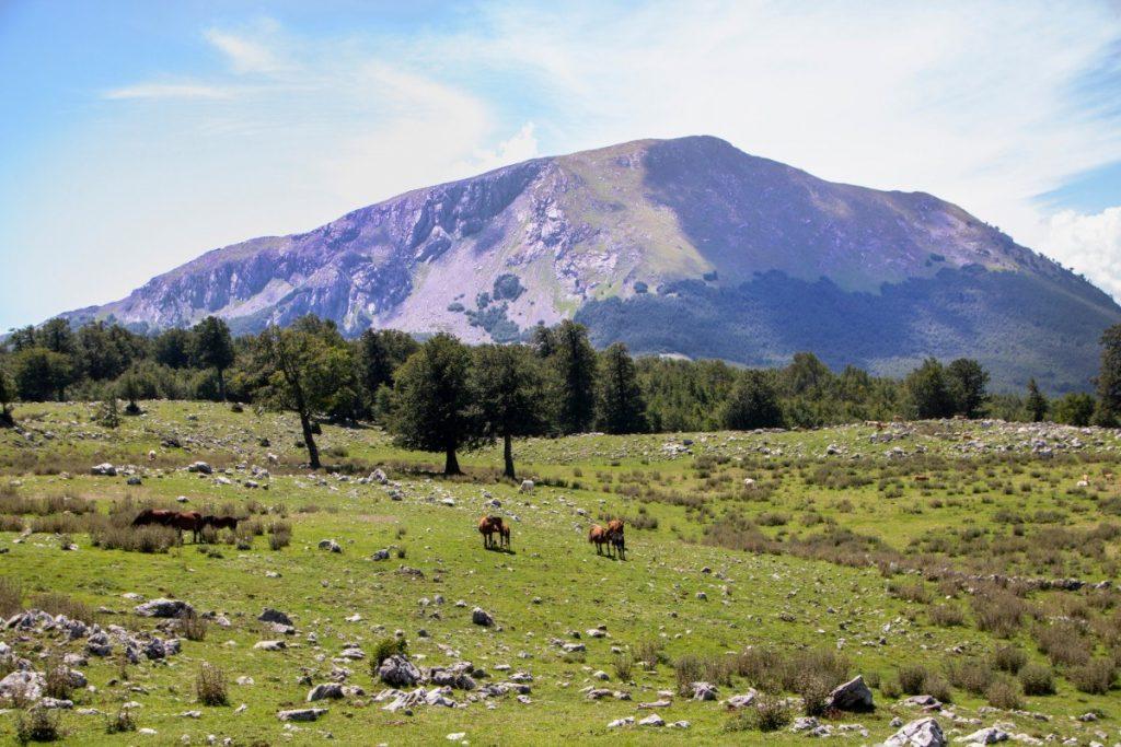 Krajina národního parku Pollino je značně kopcovitá.