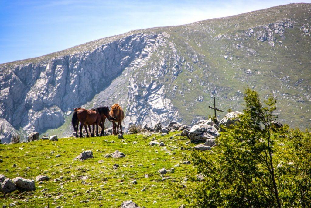 V národním parku Pollino můžete potkat volně se pasoucí koně.