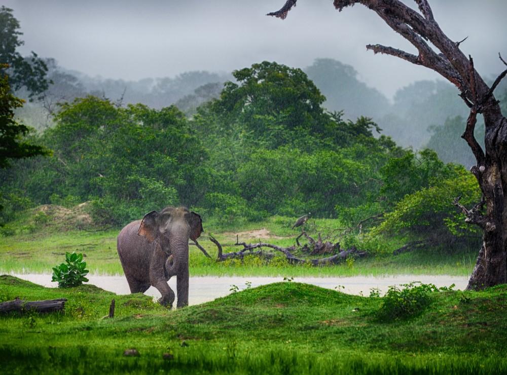 Srí Lanka - zájezdy pro seniory - foto 10