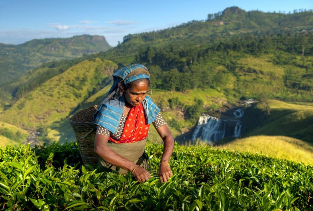 Srí Lanka - zájezdy pro seniory 55+ foto 7