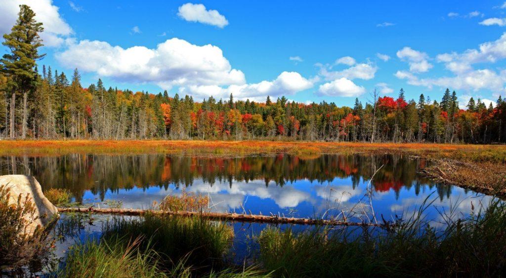 Podzimně vybarvený Algonquin Park v Kanadě.
