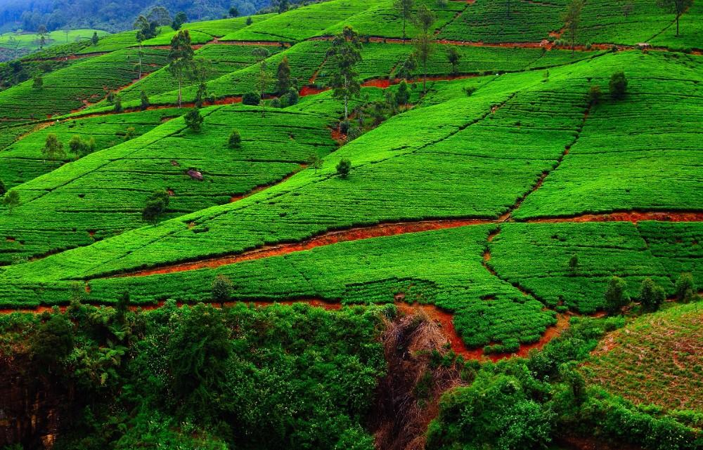 Srí Lanka - dovolená pro seniory 55+ foto 2