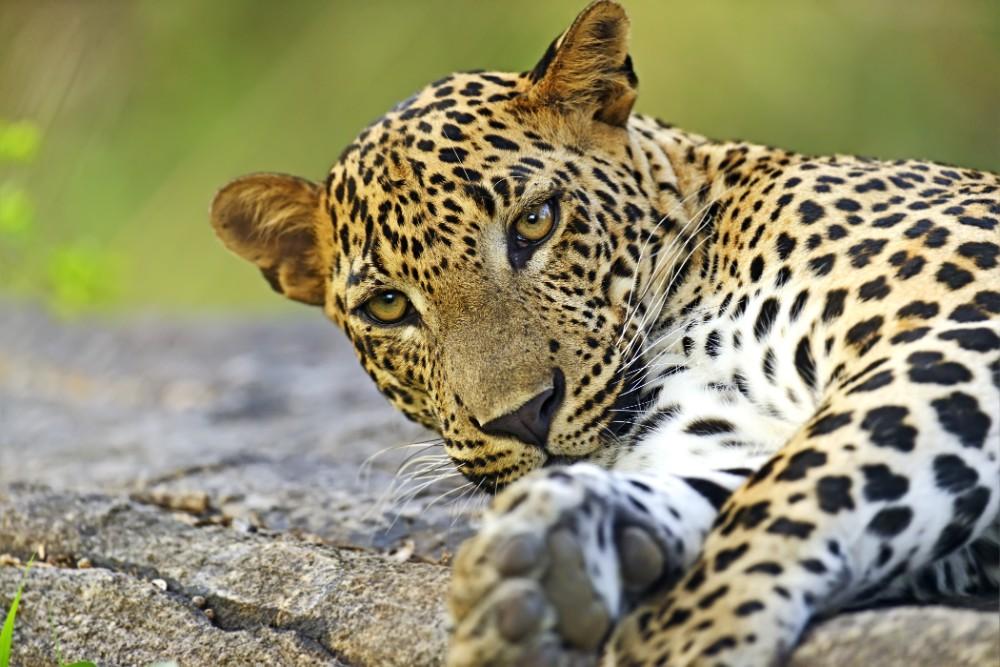 Srí Lanka - dovolená pro seniory 55+ foto 4