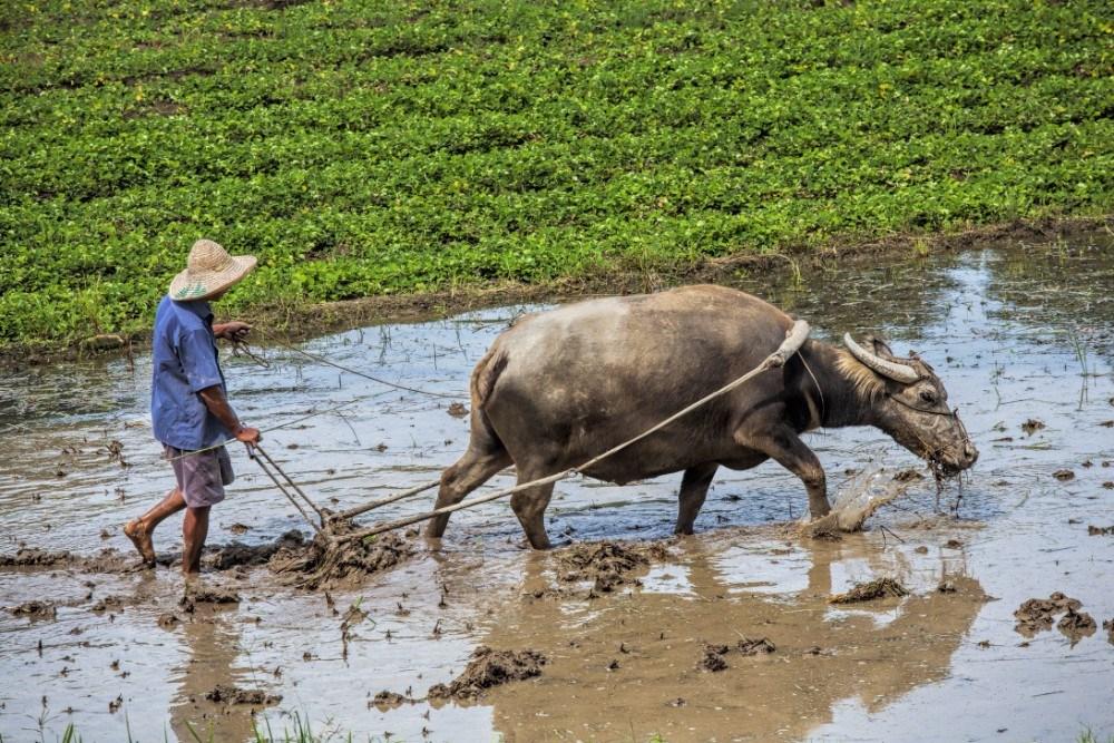 Čína pro seniory, foto 9