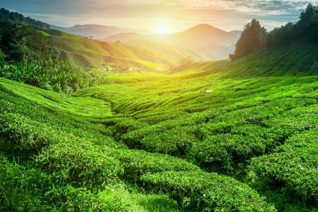Srí Lanka - dovolená pro seniory 55+ foto 8