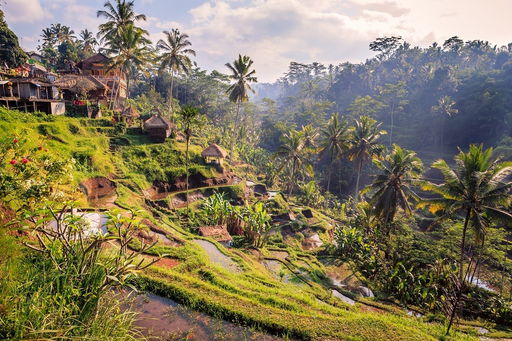 shutterstock_316997570 rice fields in the jungle and the mountain near Ubud