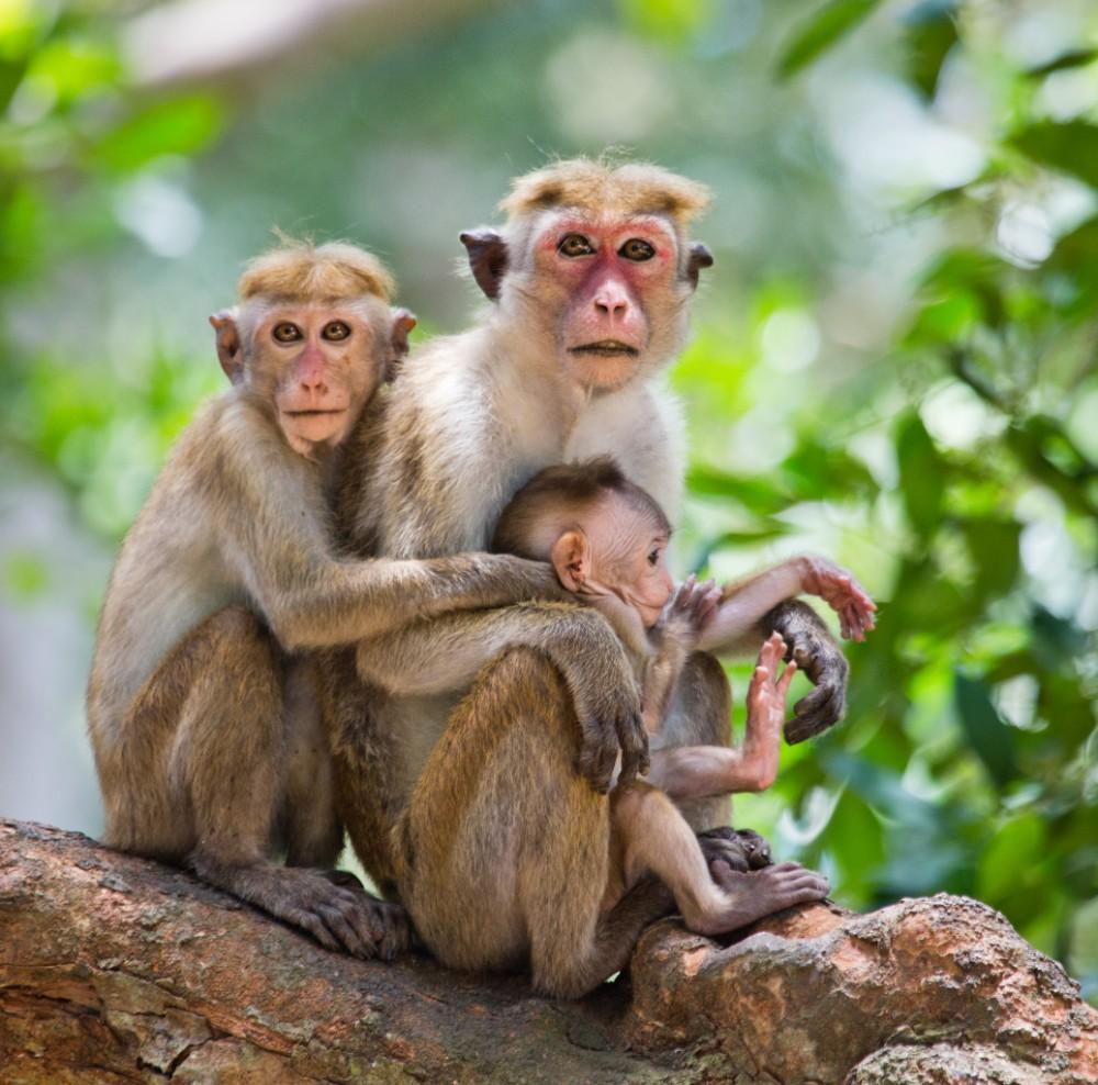 Srí Lanka - exotika pro seniory 55+ foto 4