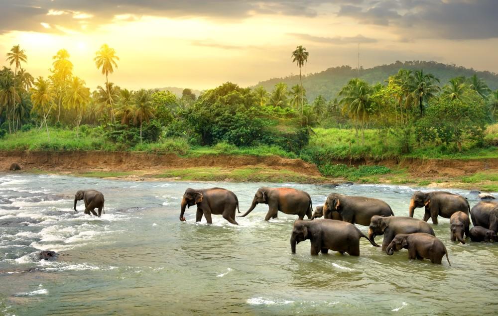 Srí Lanka - exotika pro seniory 55+ foto 8