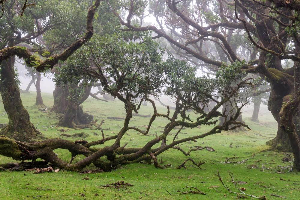 Divoká Madeira - pěší turistika pro seniory - foto 4