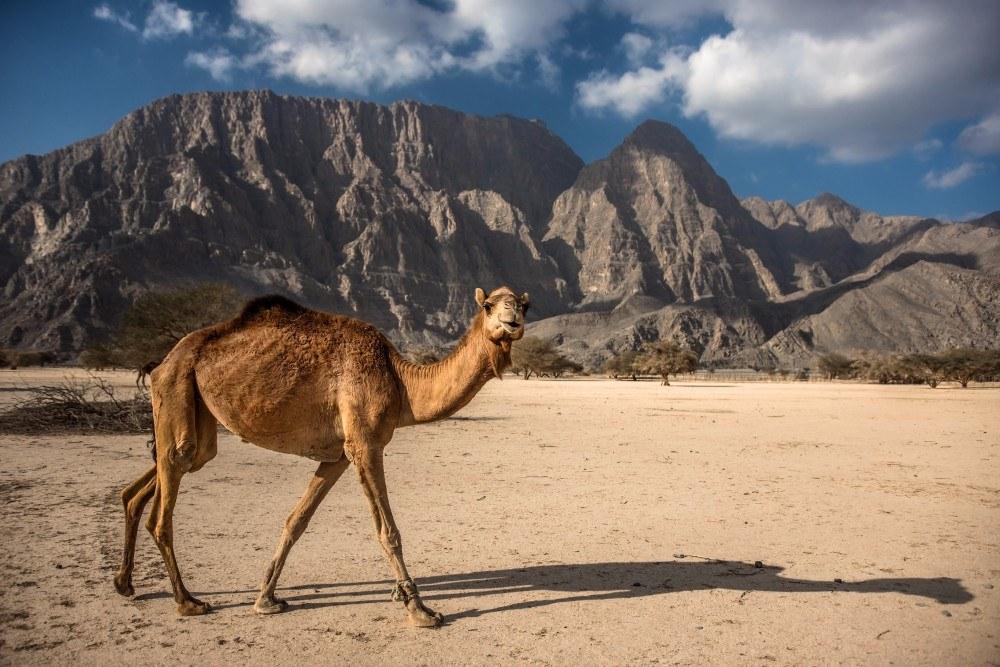 Omán 55+ - exotické zájezdy pro seniory - foto 9