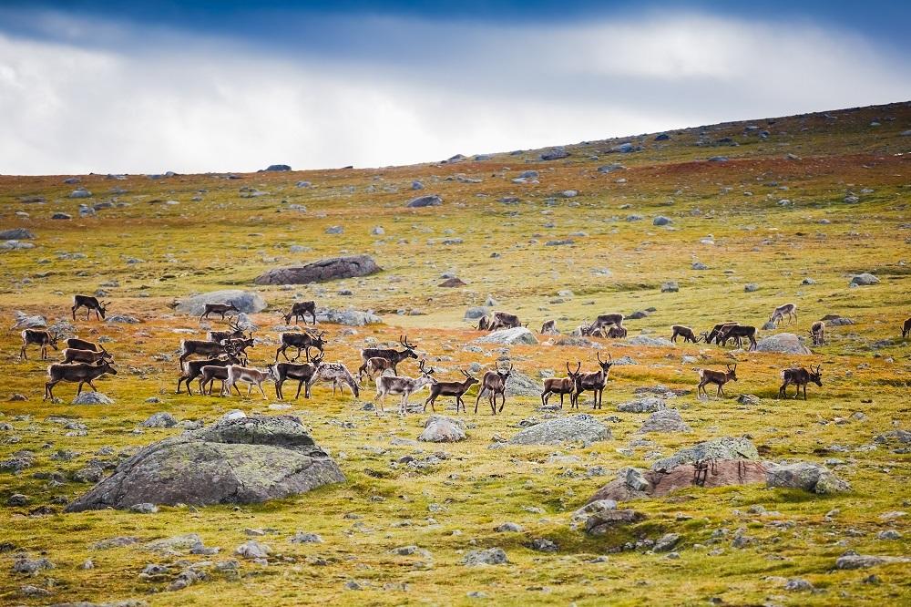 Velká cesta zemí fjordů, Norsko pro seniory 55+ - foto 61
