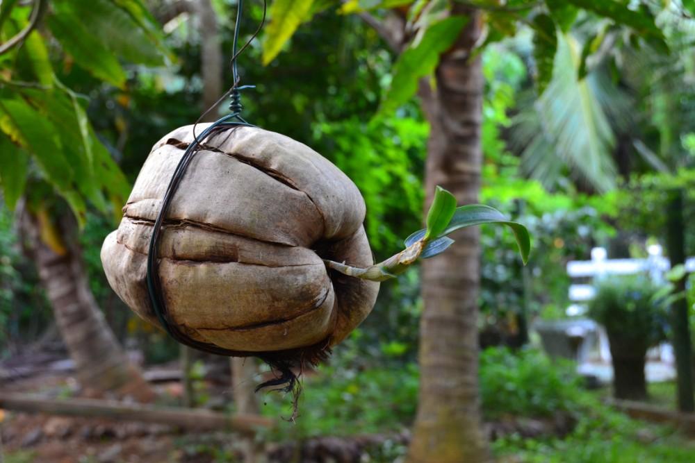 Srí Lanka - exotické zájezdy pro seniory 55+ foto 8
