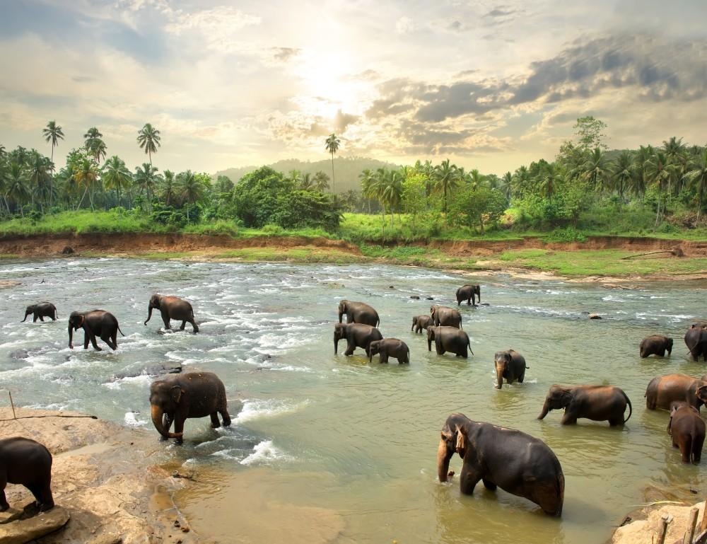 Srí Lanka - exotické zájezdy pro seniory 55+ foto 9