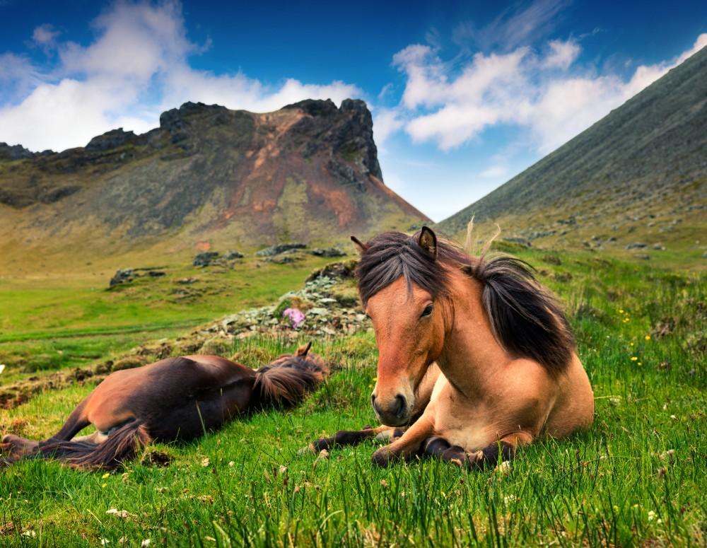 Island - zájezdy pro seniory 55+ foto 9