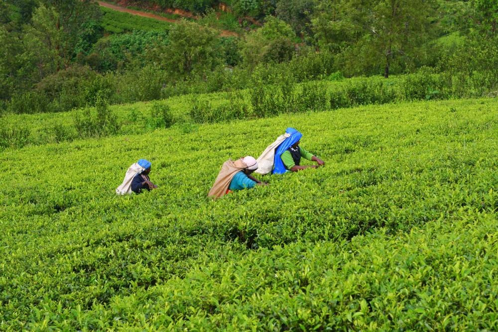 Srí Lanka - zájezdy pro seniory - foto 1