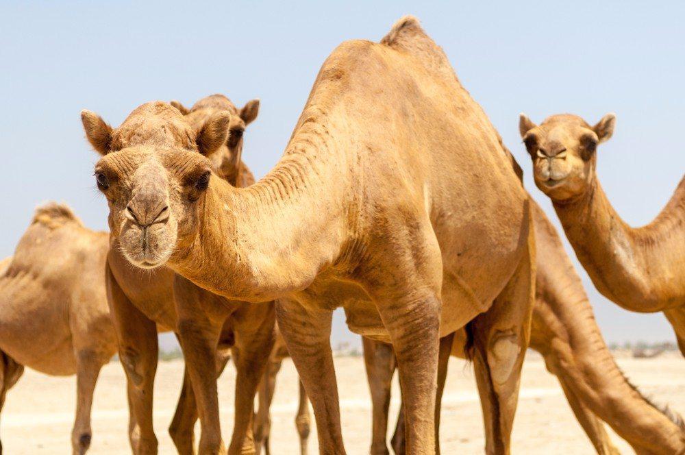 Omán 55+ dovolená pro seniory - foto 5