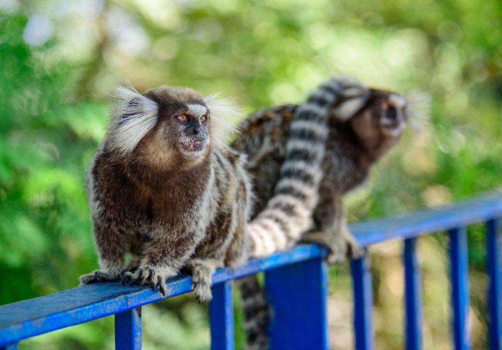 Během nenáročné procházky lesem Tijuca v Rio de Janeiru uvidíte tropická zvířata a exotickou flóru.