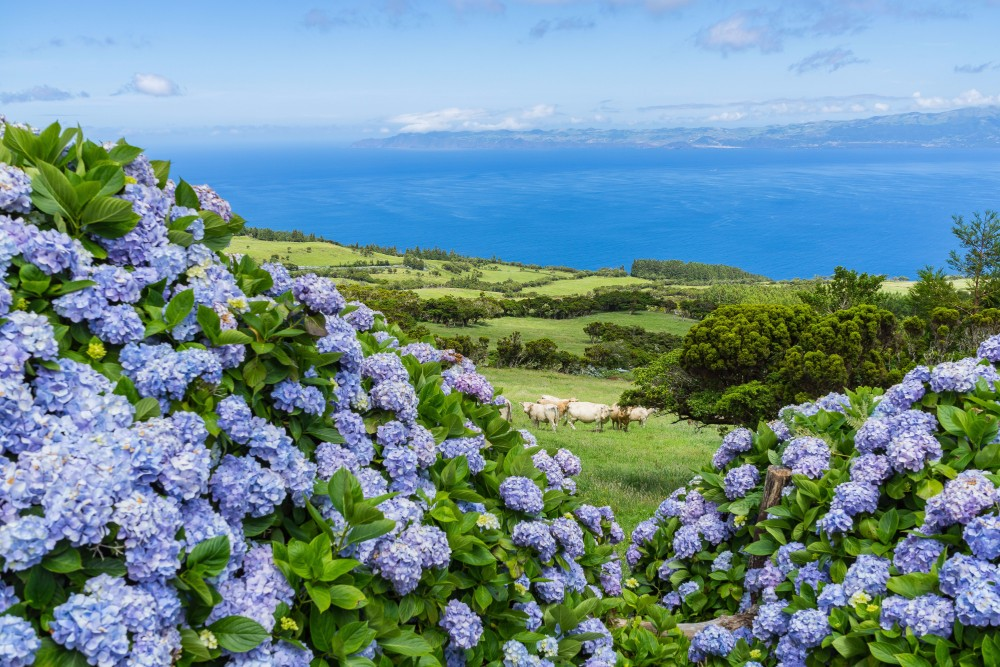 Azorské ostrovy - zájezdy pro seniory 55+ foto 6
