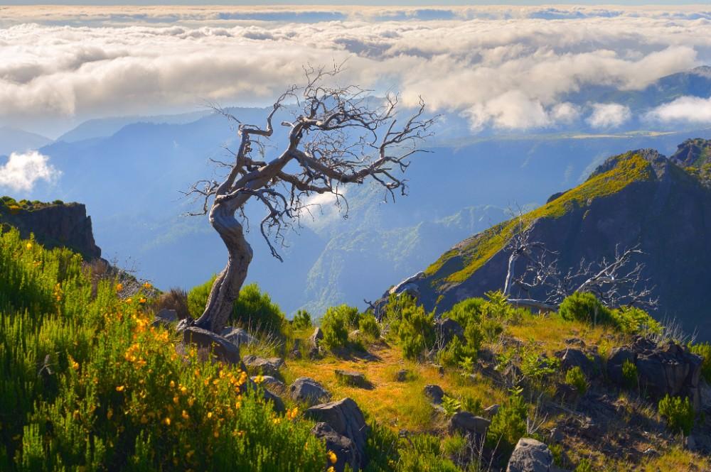 Divoká Madeira 55+ zájezdy pro seniory - foto 8