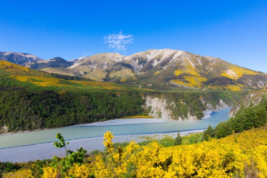Národní park Arthur´s Pass je v jarních měsících v obležení květin.