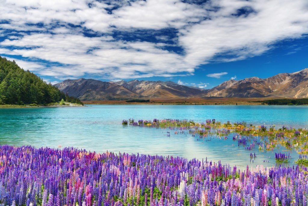 Mléčně modrá hladina jezera Tekapo na Jižním ostrově.